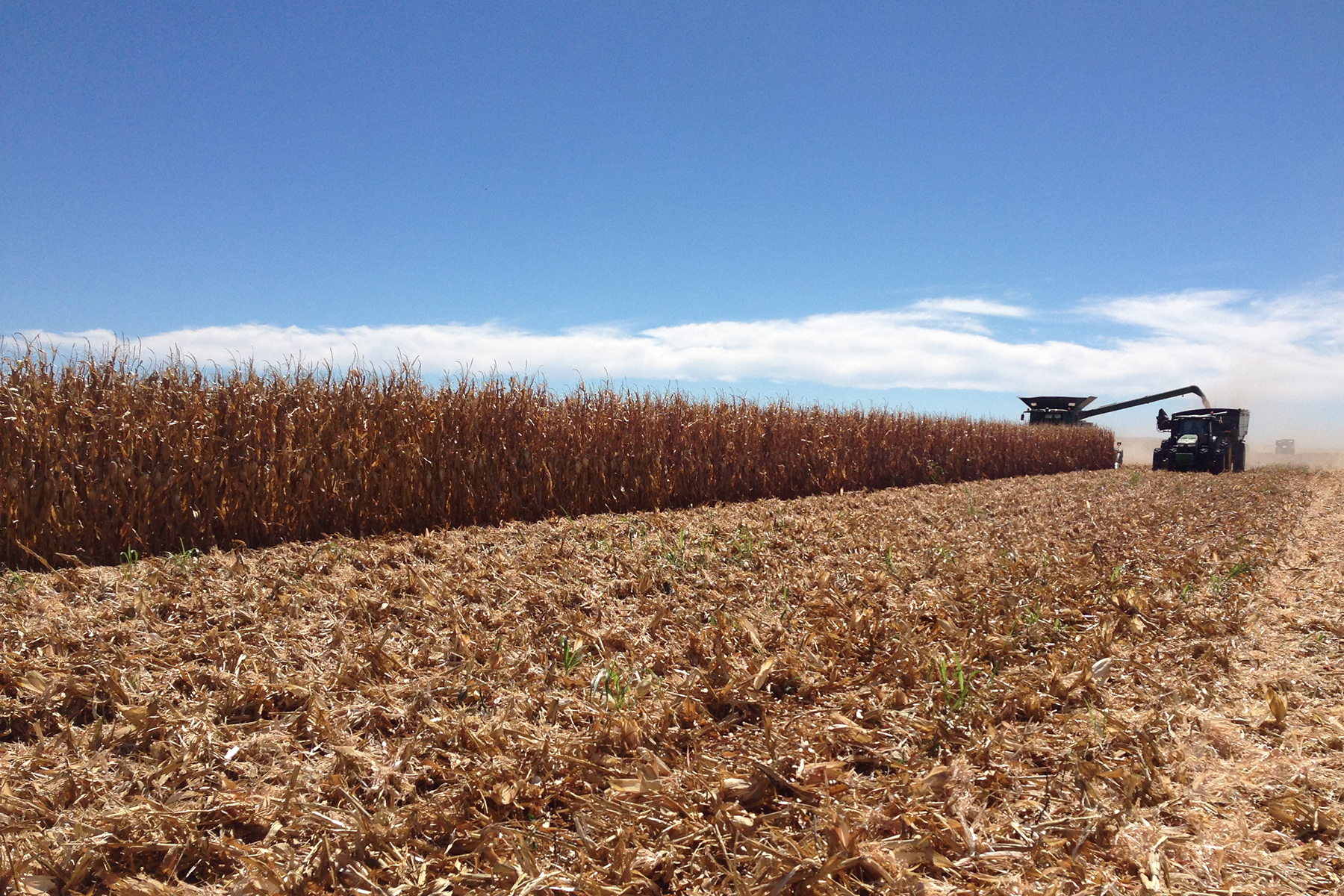 Field being harvested